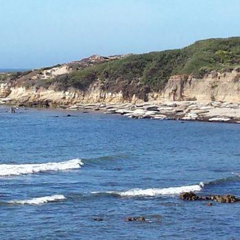 Point lobos waar zeekoeien liggen te zonnen