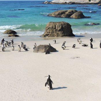 Boulders Beach, wat een feest met de pinguïns!