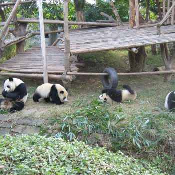 Chengdu Panda center