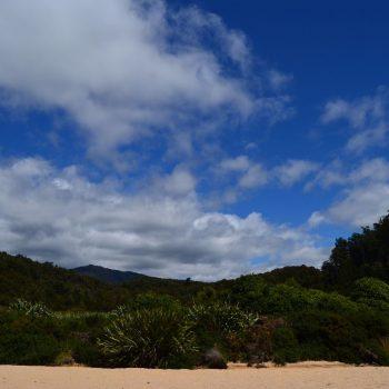 Jungle gezien vanaf het strand