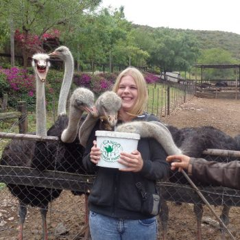 Struisvogel Farm