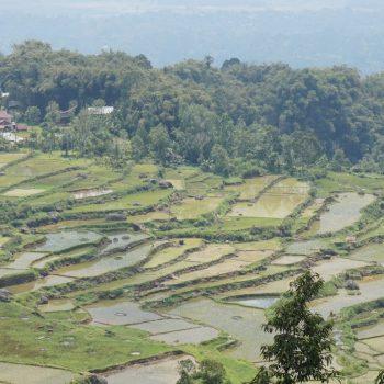 1 van de vele rijstvelden