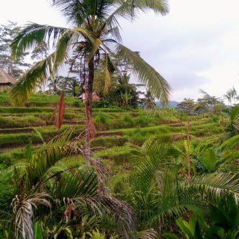 mooie natuur in Bali