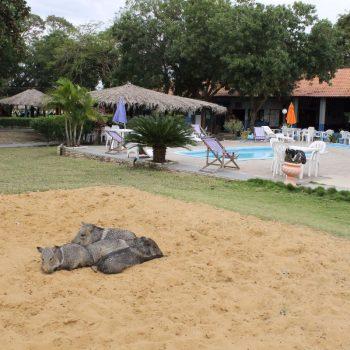 Overal dieren in de Pantanal!