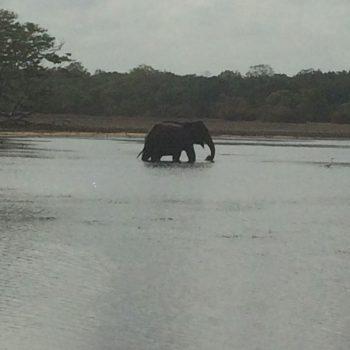Wildlife, olifantjes!!