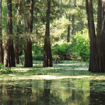 Swamp bij Henderson Lake