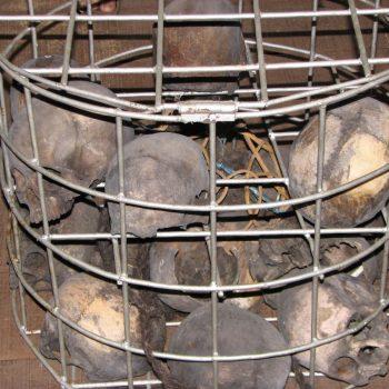 oude schedels buitgemaakt door de koppensnellers