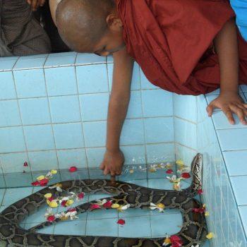 priester bij de heilige slang