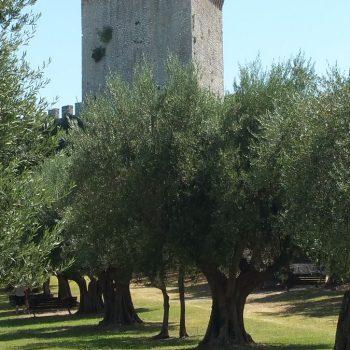 Vele kastelen en olijfbomen