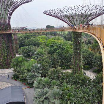 Treetop walk Gardens by the bay