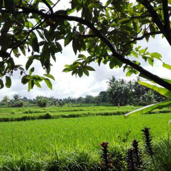Uitzicht vanuit accomodatie Ubud