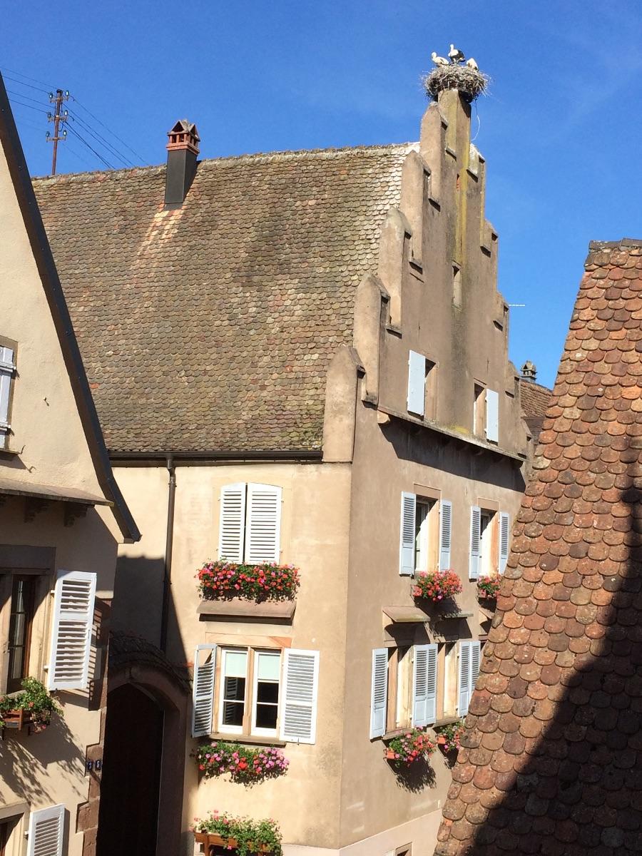 Ooievaarsnest op de daken