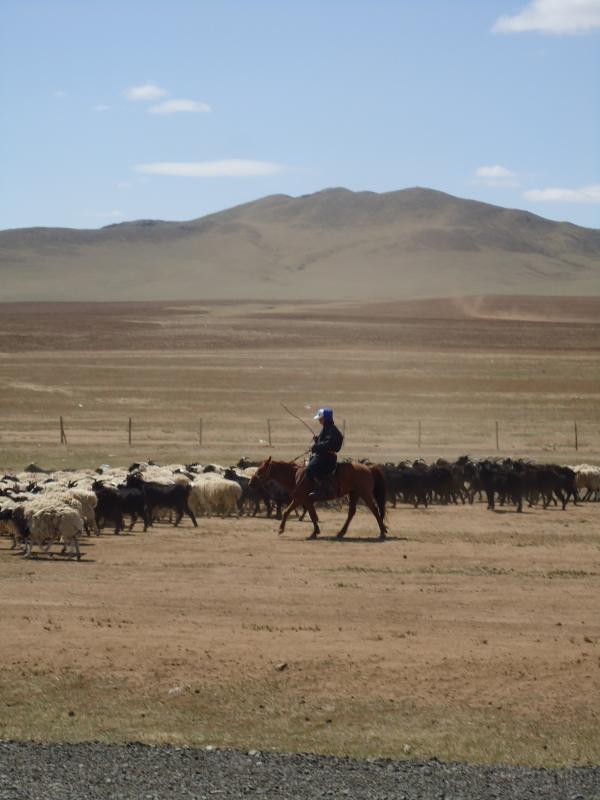 herders met hun schapen