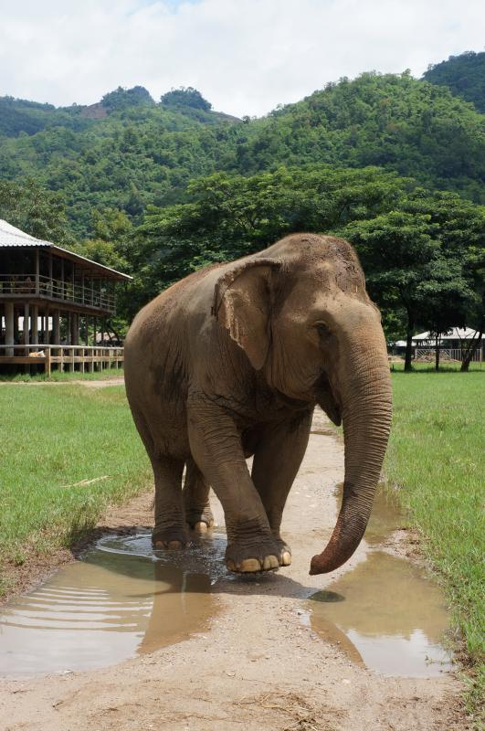 Elephant Nature Park vlakbij Chiang Mai