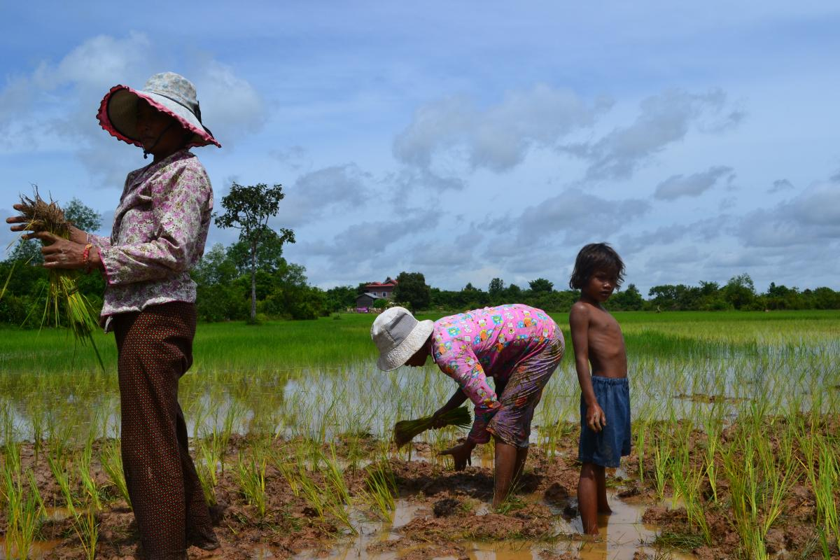 Platteland in Cambodja