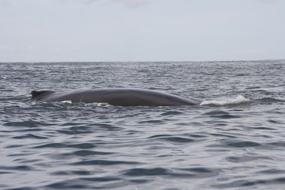 Een walvismoeder met haar jong