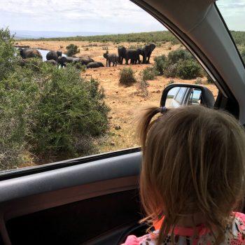 Onze kleine meid genoot van de olifanten!