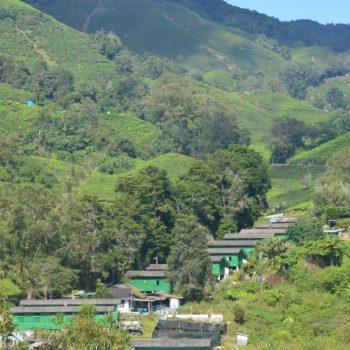 Uitzicht boh plantages op de hutten van de plukkers