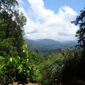 Het uitzicht na de wandeling door de jungle