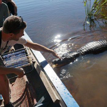 Een krokodil!