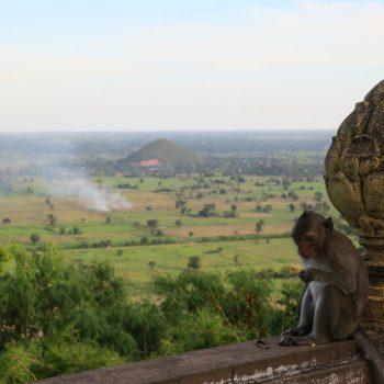 battambang, bat cave