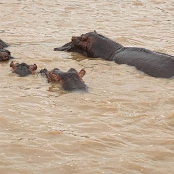 Tocht over de nijlpaardenrivier