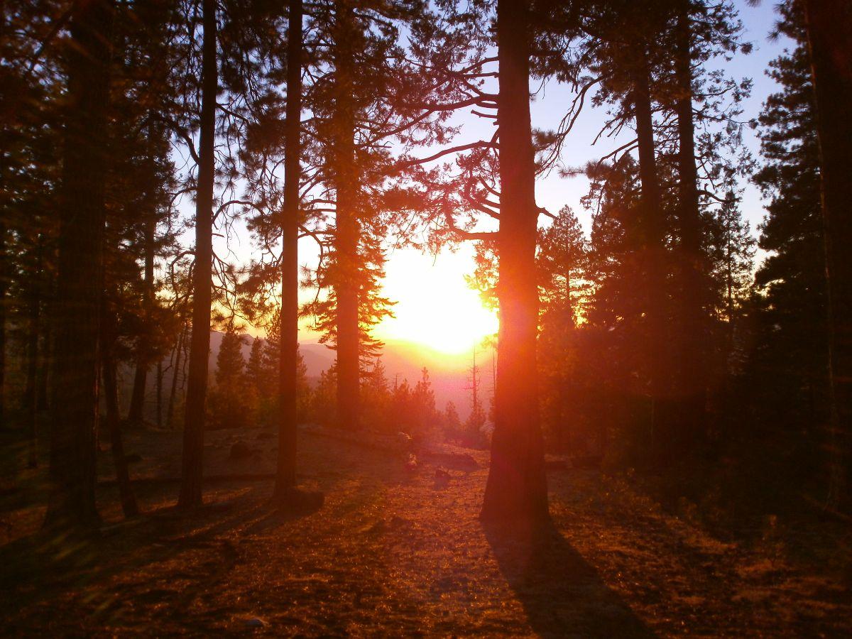 sunset in het woud