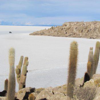 Cactus eiland op de salar