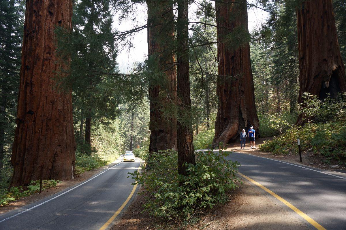 Sequoia Road split