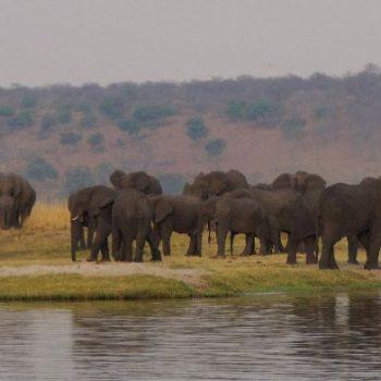 Heel veel olifanten tijdens Sunset Cruise