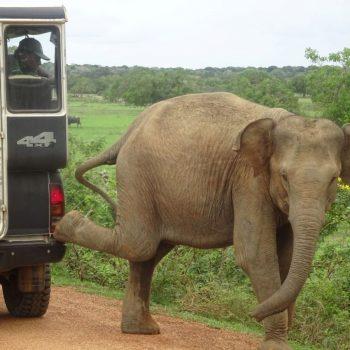 Deze olifant vond blijkbaar ook dat deze jeep te dichtbij stond
