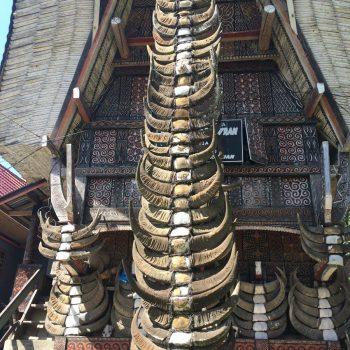 De hoorns van geofferde buffels