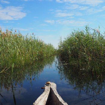 Het spiegelgladde water van de Okavango Delta