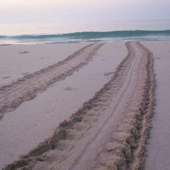 spoor van zee schildpad terug naar de zee