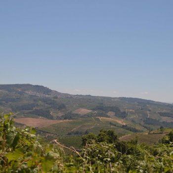 Douro Vallei