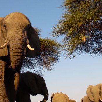 vlakbij de olifanten