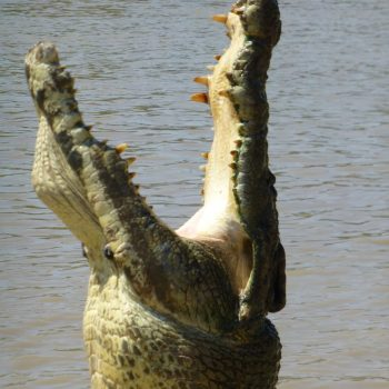 Jumping crocodile cruise op Yellow Waters Creek