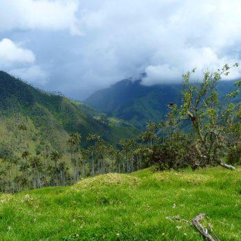 Valle de Cocorra 2.0 (niet de standaard toeristische trekpleister, maar fiets hier heen. Aan de andere kant van Salento)