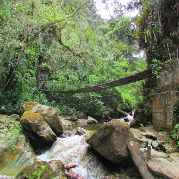 Prachtige jungles met twijfelachtige bruggetjes