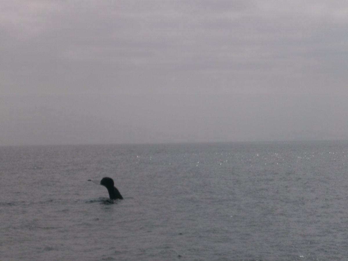 Whale Whatching vanuit Santa Barbara