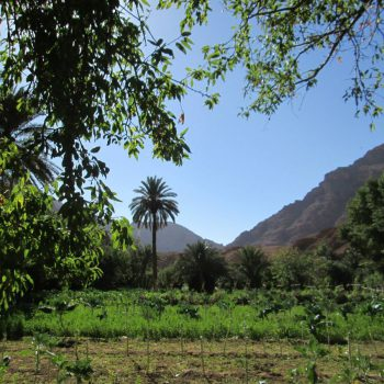 Groene oase in de woestijn