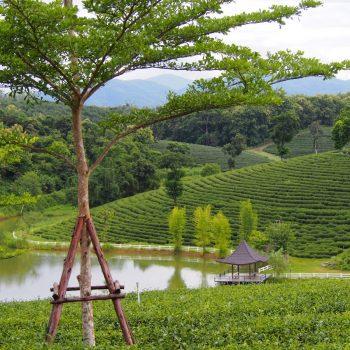 De prachtige natuur in Thailand!