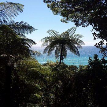 Uitzicht over de oceaan vanuit de jungle