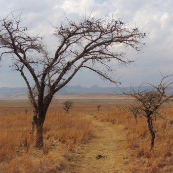Drakensbergen: grillig natuurgebied