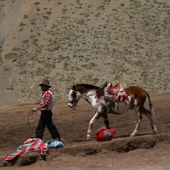 stukje cultuur, de vele paarden