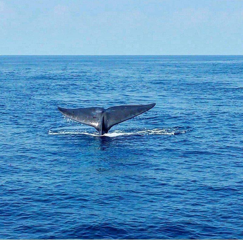 Walvissen gespot aan Mirissa