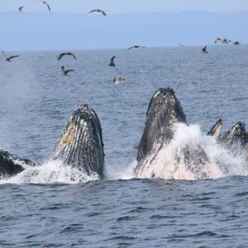 Monterey - Walvissen spotten