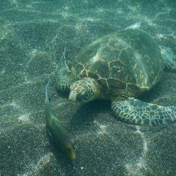 Onderwaterleven op de Galapagos