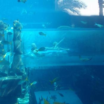 Een tunnel tussen de haaien door, Atlantis