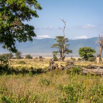 Mooi landschap met eenzame olifant!